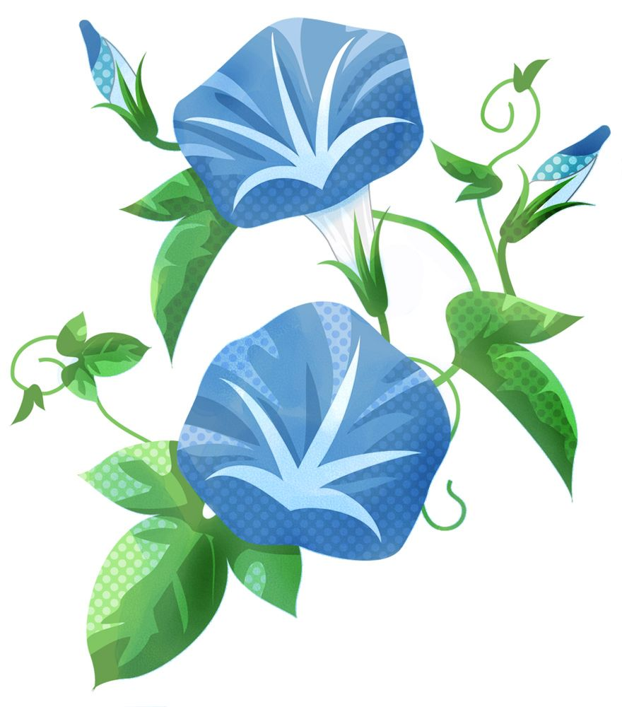 青いアサガオ フリー素材 ... : 小学生の自由研究 : 小学生