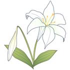 お花のマークユリ2印刷用