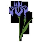 お花型菖蒲