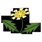 お花型タンポポ