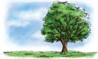 樹と大地のイラストPNG24印刷向け4