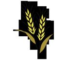 ビールなイメージのラベル用イラスト麦の実2
