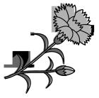 白黒イラスト0904カーネーション