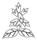白黒サルビア3
