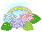 紫陽花・雨上がり・虹