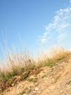 空と草と地面の風景