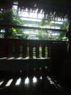 写真素材植物園