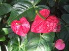 写真素材植物1