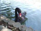 写真素材黒鳥