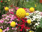 写真素材お花