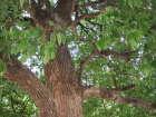 写真素材樹